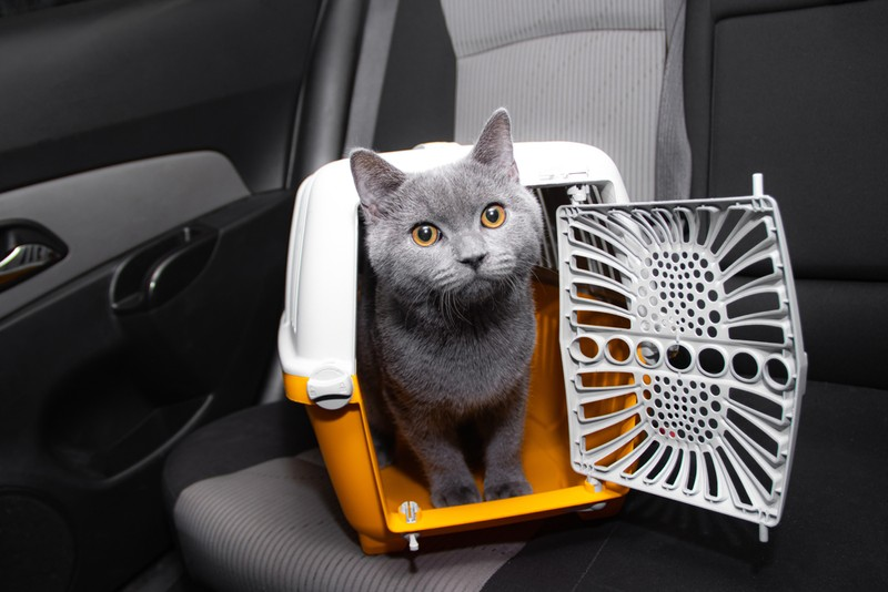 Four things every new cat parent should keep in mind!
